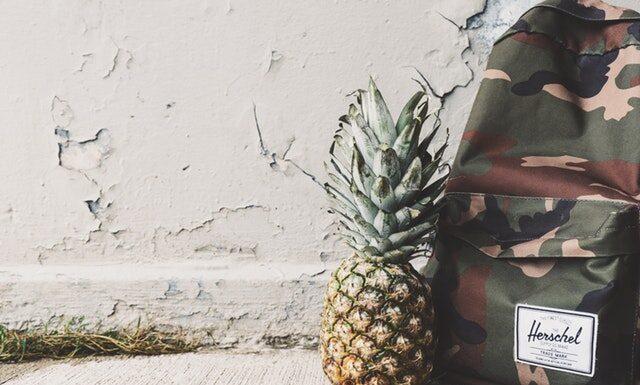 Jak rośnie ananas?